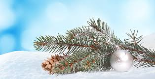 Decorative image of pine bough against a snowy background